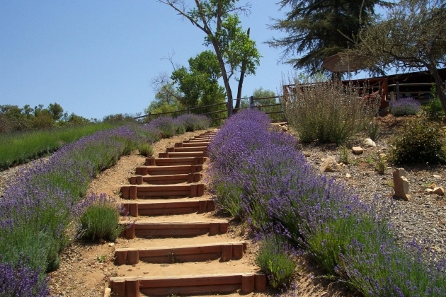 Building Stairs Into A Hill How To Calculate Horizontal Hillside Run Picture 36