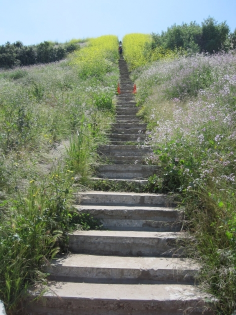 Baldwin Hills Scenic Overlook Culver City Stairs Beyond Limits On Foot Pictures 41