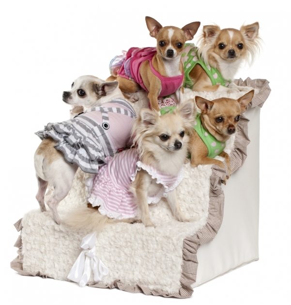 Pet Stairs For Bed Safe Pet Movement Using Dog Stairs For Bed Image 91
