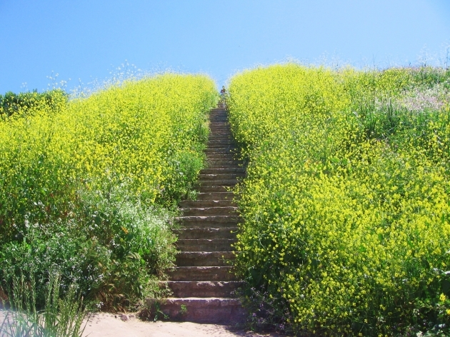 Culver City Stairs Hours Photos 71